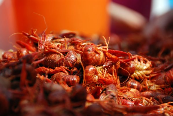 Crawfish Close-Up 1